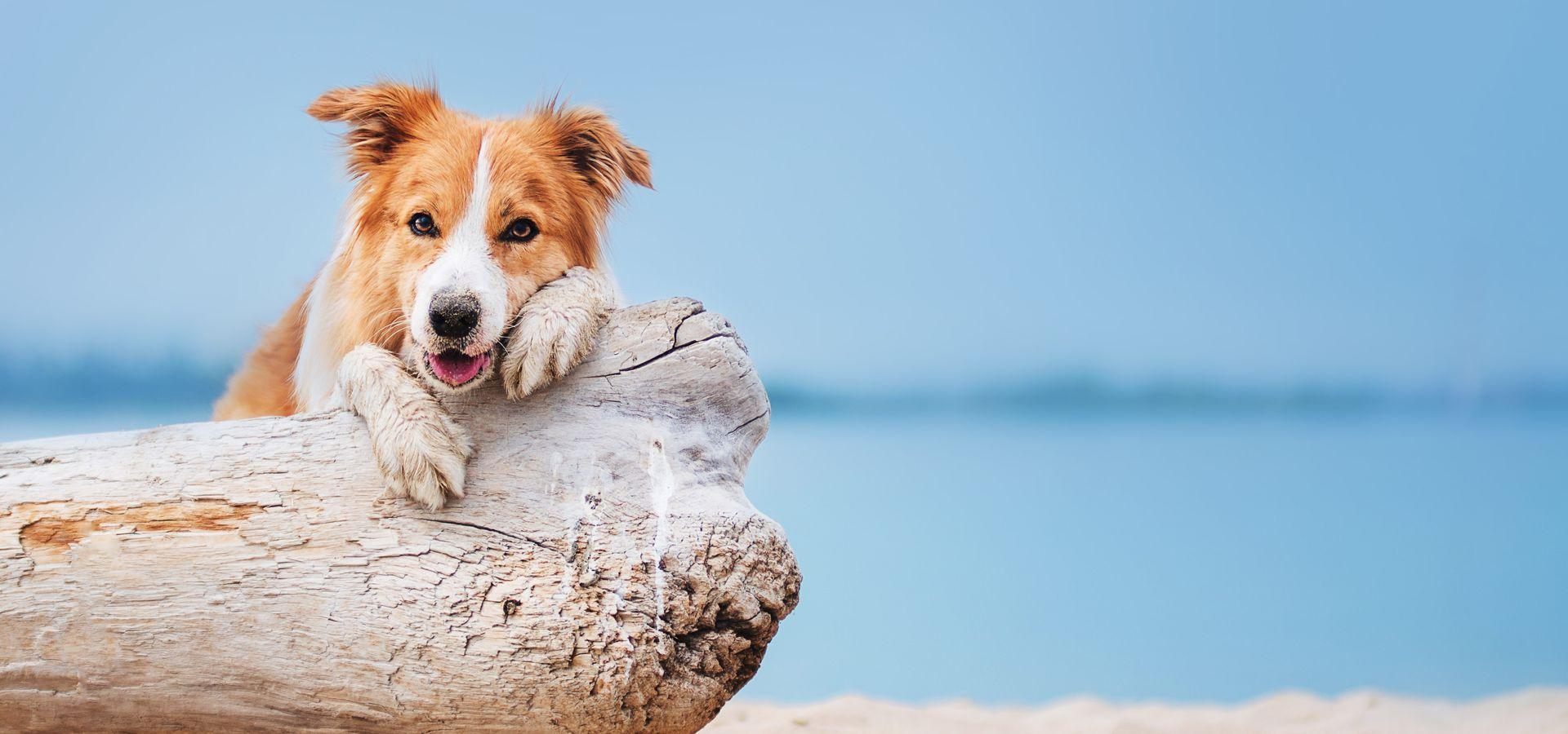 Hundestrände